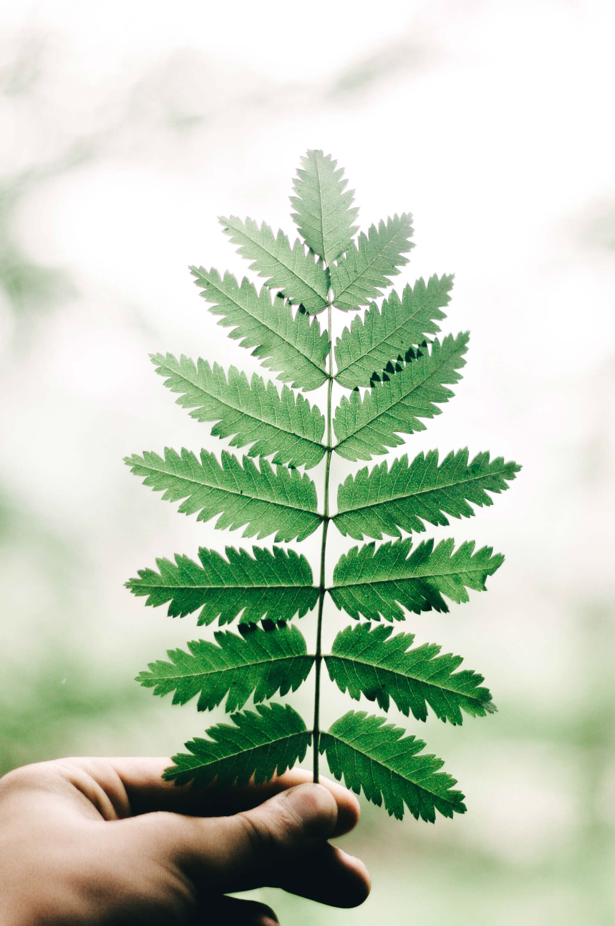 Baum Des Lebens Taufengeschenkde